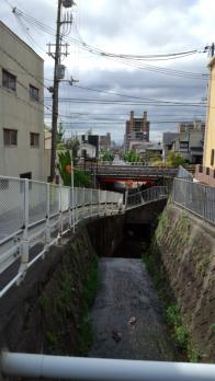 神戸 イノシシ 1