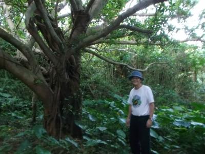 沖縄の大きな木