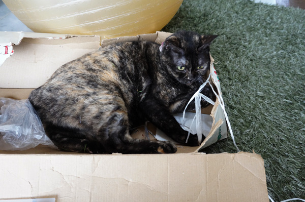 ツリー箱ネコ
