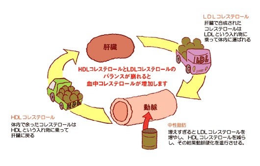 脂質の検査   健診結果の見方   保健のページ   J.フロ …