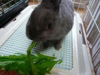 水菜大好き