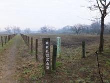 毎日お疲れ-2012田島が原さくら草公園006