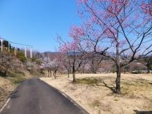毎日お疲れ-2012.3茨城県フラワーパーク016