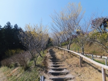 毎日お疲れ-2012.3茨城県フラワーパーク015