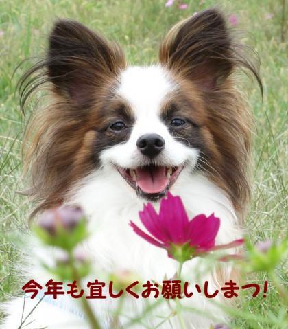 2012_1014_094047-DSC01140_convert_20121228190510.jpg