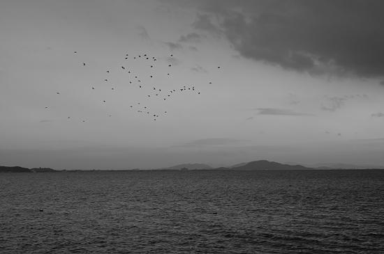 奥琵琶湖3-11