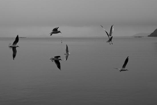 奥琵琶湖3-8