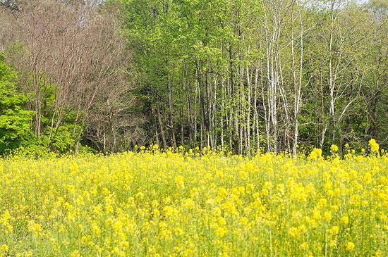森林公園の春 - 現身日和 【うつ...