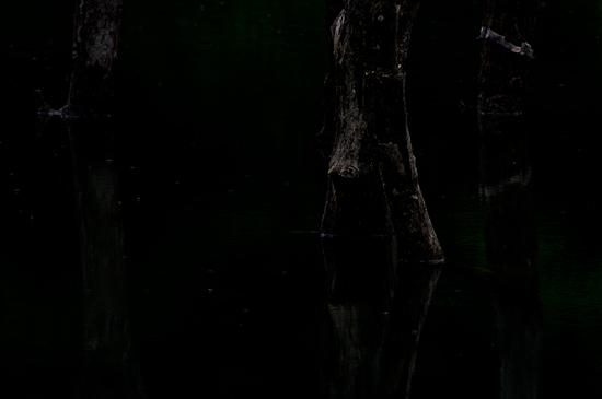 海上の森-11