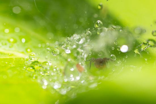 植物園雨-7