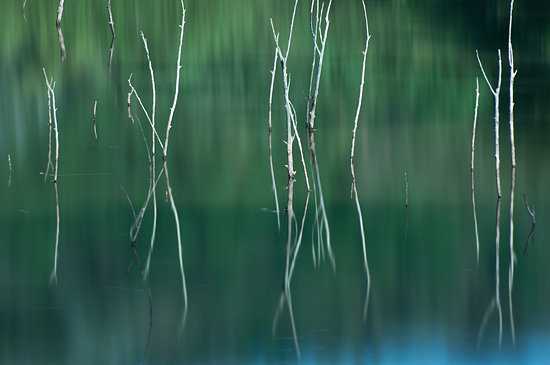 海上の森-1