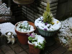 朝から雪が降ってます