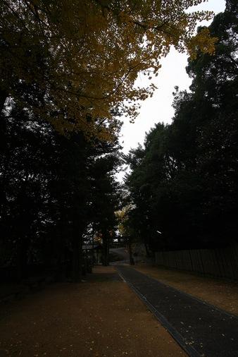 20111125haltukou09.jpg