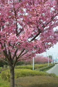 4月8日 熊本高専前(熊本県合志市)