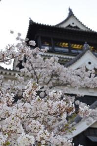 4月8日 熊本城(熊本県熊本市)