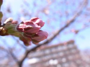 3月29日 山王公園(福岡市博多区)