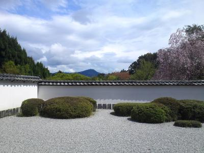 1正伝寺枯山水桜比叡山