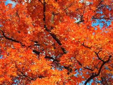 岡山2_convert_20121208092628