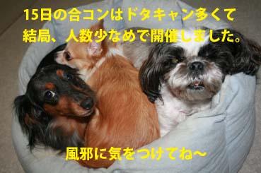 IMG_8841_20141120161148fd0.jpg