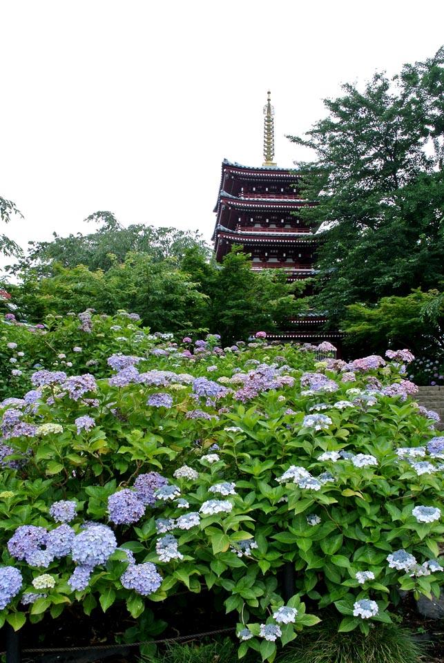 DSC_5442本土寺