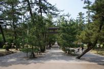 松の木の根を守るため、両端を歩きます。