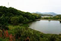 こんな池でした。