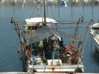 漁船もたくさんとまってます