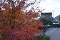 真っ赤な紅葉と藁ぶき屋根