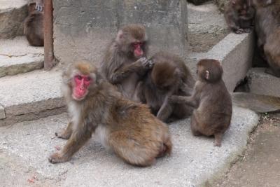 140101③高崎山の猿①