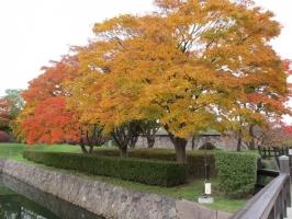 もっと枯れていると思ったけど紅葉が綺麗で感激しました。