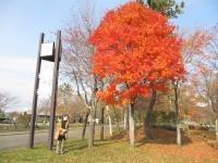 時計台?!紅葉が綺麗だったので撮りました。