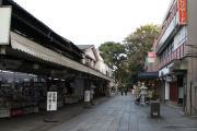 421 熊本 水前寺成趣園