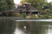 456 熊本 水前寺成趣園