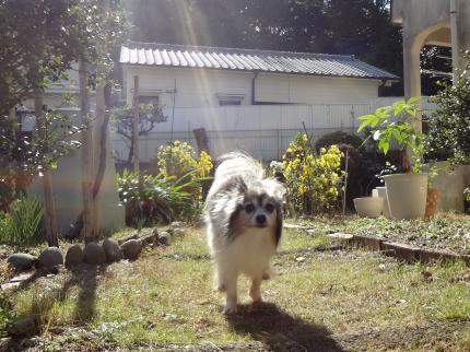 otenba20121107.jpg