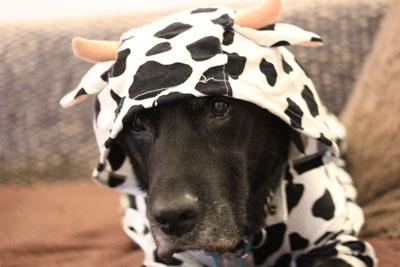 可愛い牛さんにぇ