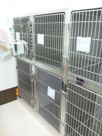 入院室 犬2