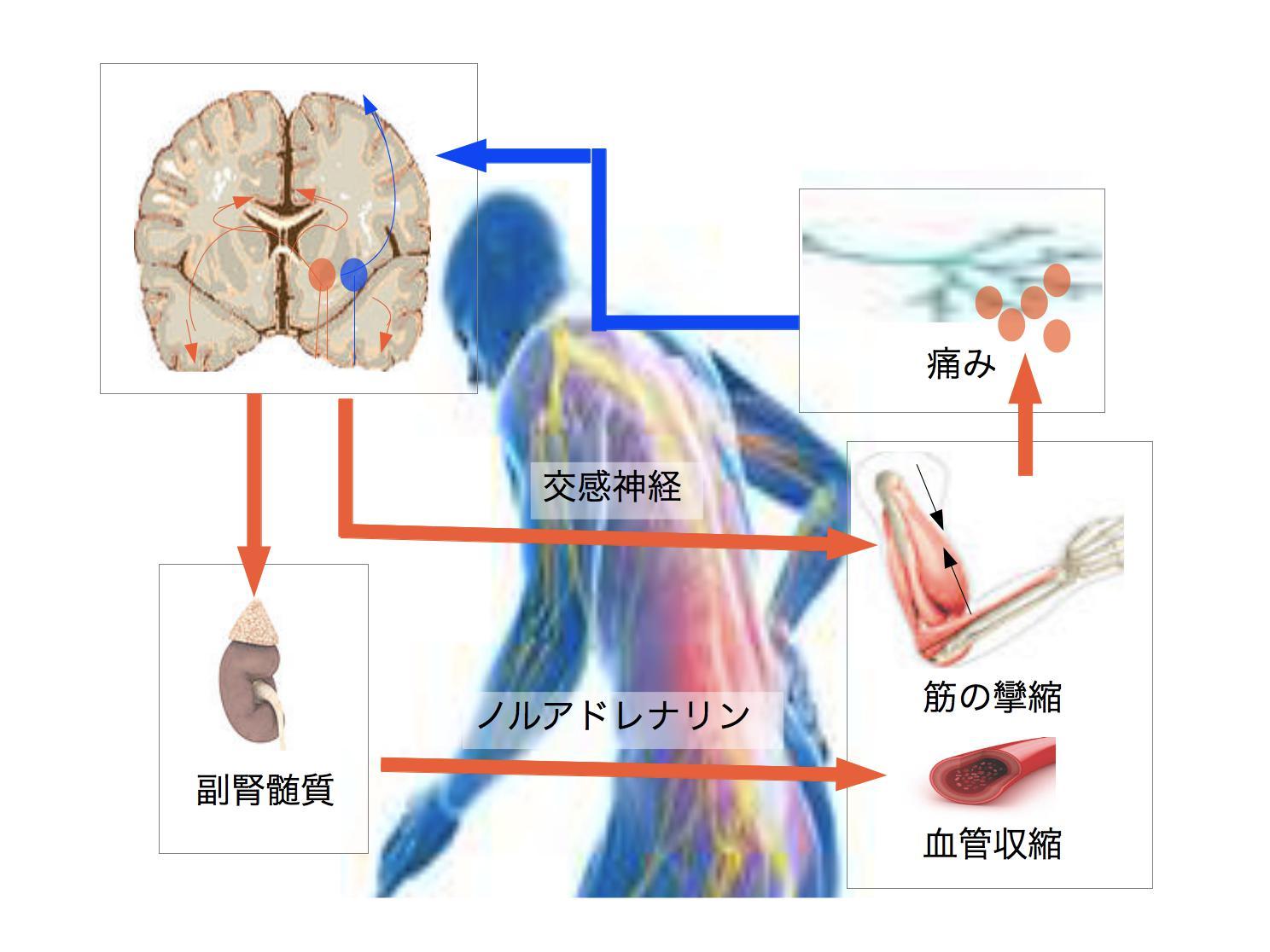 心理社会的要因と腰痛
