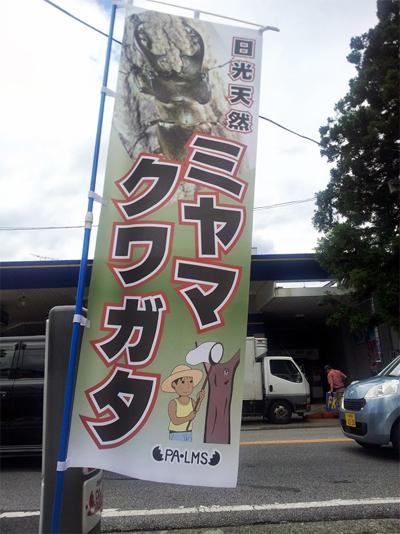 パームス夏限定クワガタ・カブト虫販売のぼり旗