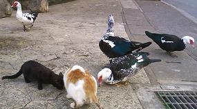 仲良しな鳥さんと猫さんたち
