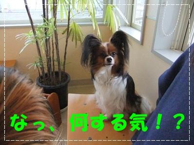 DSCF0188-20120512.jpg