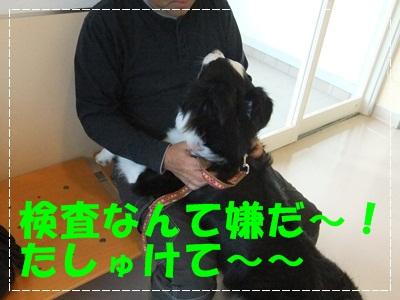 DSCF0189-20120512.jpg