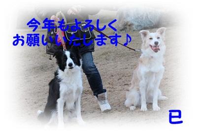IMG_2171-20130101.jpg
