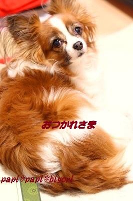 仕事納め★2013