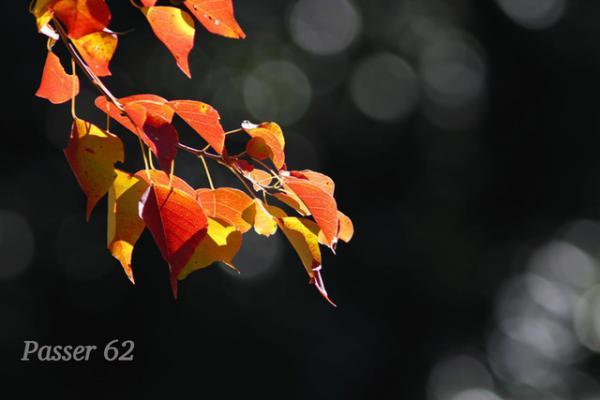 紅葉のナンキンハゼ