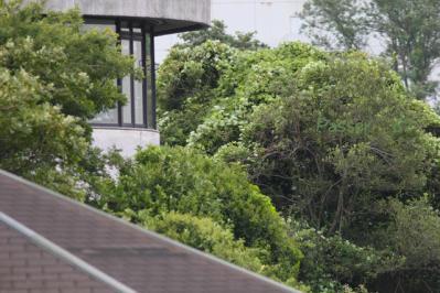 観察小屋から見た東京港野鳥公園本館