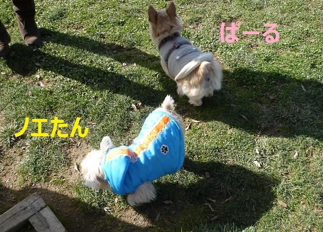 11_20130112075642.jpg