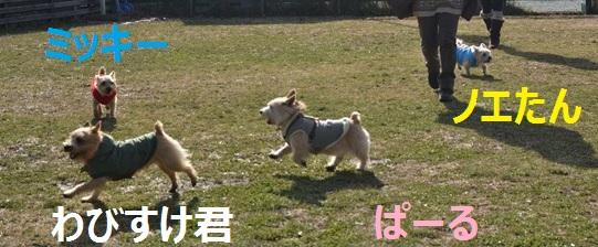 1_20130112075543.jpg