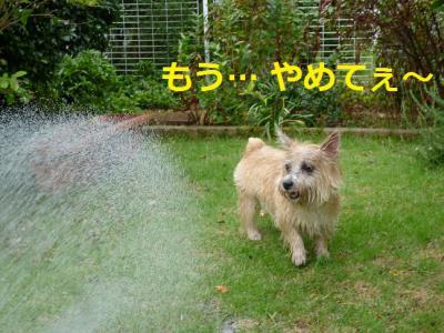 2_20120919231728.jpg