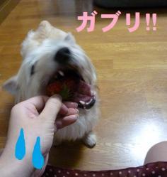 itigo3_20120608114728.jpg