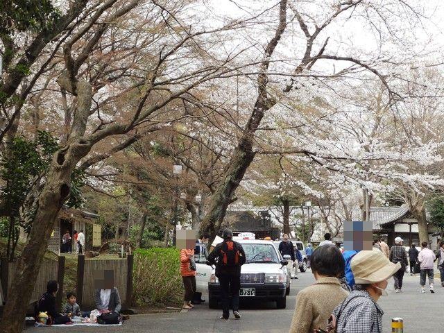 伏姫桜の前でピクニック(場所)